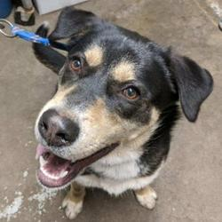Mayfield Graves County Animal Shelter In Mayfield Kentucky