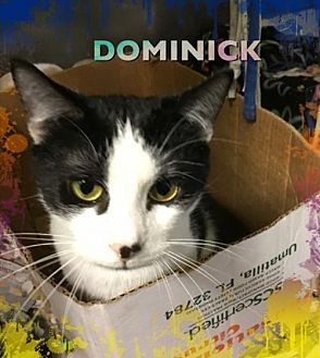 Adopt A Pet :: Dominick  - Mt Vernon, IN