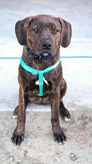Adopt A Pet :: Kade  - Anchorage, AK