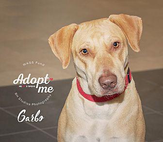 Adopt A Pet :: Garbo  - Houston, TX
