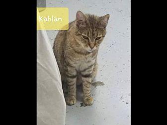 Adopt A Pet :: Kahlan  - Mt Vernon, IN