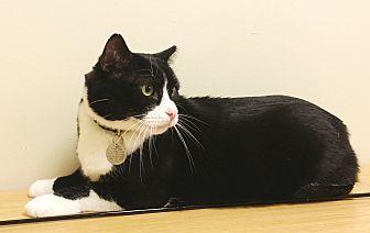 Adopt A Pet :: Hop-a-long  - Edmond, OK