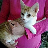 Adopt A Pet :: Jackson *Courtesy Post* - Redding, CA