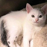 Adopt A Pet :: SKYLAR - Hampton Bays, NY