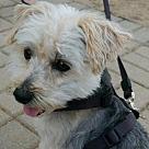 Adopt A Pet :: Scruffy
