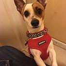 Adopt A Pet :: Popi (COURTESY POST)