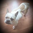Adopt A Pet :: Angelica