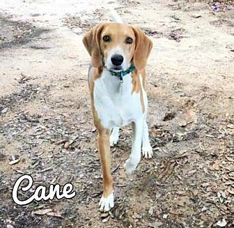 Adopt A Pet :: Cane  - Mobile, AL