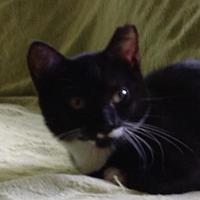 Adopt A Pet :: Amelia - Spartanburg, SC
