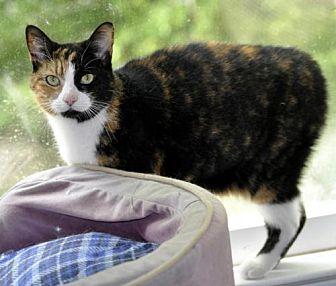 Adopt A Pet :: Sweet Pea  - Liberty, NC