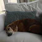 Adopt A Pet :: Elvis (COURTESY POST)