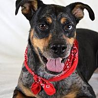 Adopt A Pet :: AJ - Jackson, MS