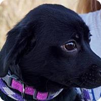 Adopt A Pet :: Kayla - LaHarpe, KS