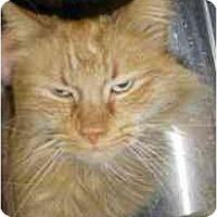 Adopt A Pet :: Tigger - Strathmore, AB