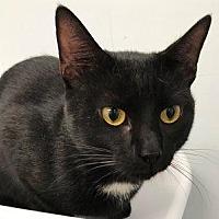 Adopt A Pet :: Cutie - Hudson, NY