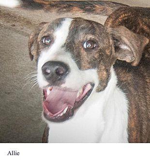 Adopt A Pet :: Allie  - Windsor, NC