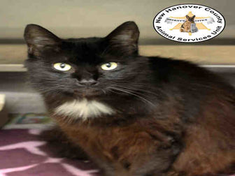 Adopt A Pet ::   - Wilmington, NC