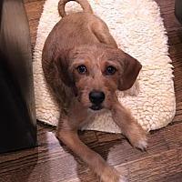 Adopt A Pet :: Connor - Atlanta, GA