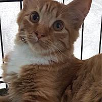 Adopt A Pet :: Tango - Key Largo, FL