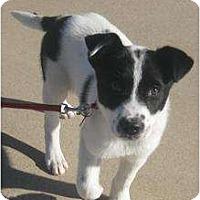 Adopt A Pet :: Trevor - Arlington, TX