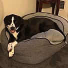 Adopt A Pet :: Talen