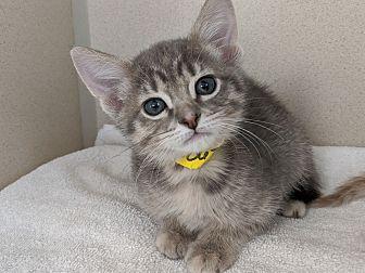 Adopt A Pet :: Lemon  - Laramie, WY