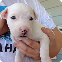 Adopt A Pet :: Barney - Long Beach, CA
