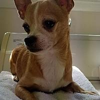 Adopt A Pet :: BooBoo - Fayette City, PA