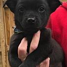 Adopt A Pet :: Baby Skipper