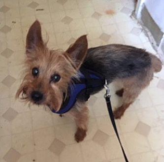Adopt A Pet :: MOCHO  - Oakland, CA