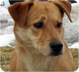 Sophie Dog Adoption