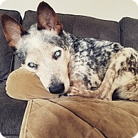 Adopt A Pet :: Warbux: pending! (NY) - Madison, WI