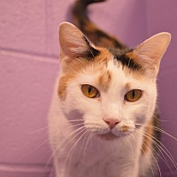 Adopt A Pet :: Dani - House Springs, MO