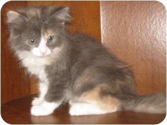Cat Adoption Dallas Tx