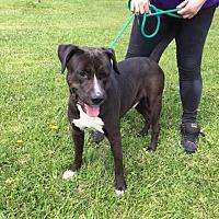Adopt A Pet :: bobby - Batavia, OH