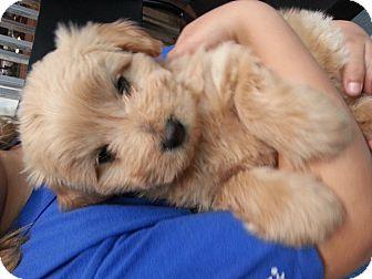 Harbor Rescue Dog