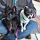 Adopt A Pet :: Beamer