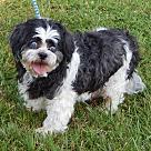 Adopt A Pet :: Kayson