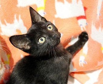 Adopt A Pet :: Bianca  - Troy, MI