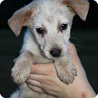 Adopt A Pet :: Jamison - Starkville, MS