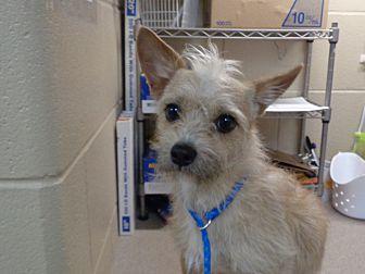 Adopt A Pet :: 19-0416  - Laramie, WY