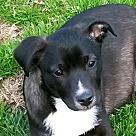 Adopt A Pet :: Lacey B