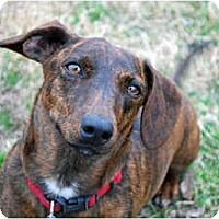 Adopt A Pet :: Oscar - Whitewright, TX