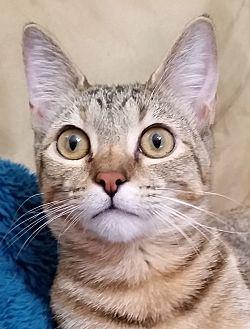 Adopt A Pet :: Mary  - Edmond, OK