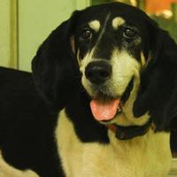 Adopt A Pet :: Nana - Ravenel, SC