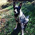 Adopt A Pet :: Neutron 5254