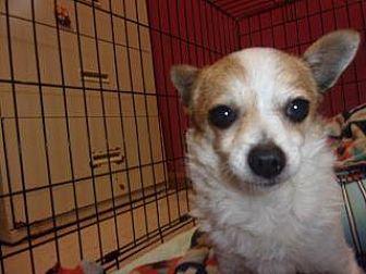 Adopt A Pet :: Patch  - Princeton, WV