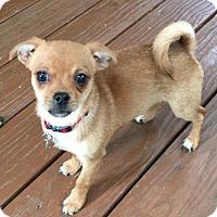 Adopt A Pet :: Jo Jo - Atlanta, GA