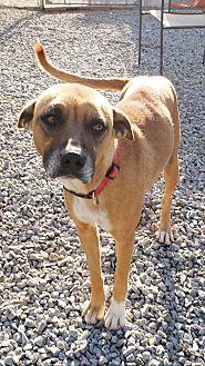Adopt A Pet :: ROXY  - Snow Hill, NC