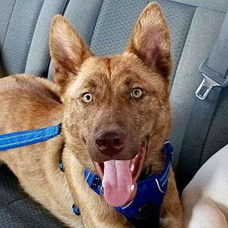 Adopt A Pet :: Tanner  - Oklahoma City, OK